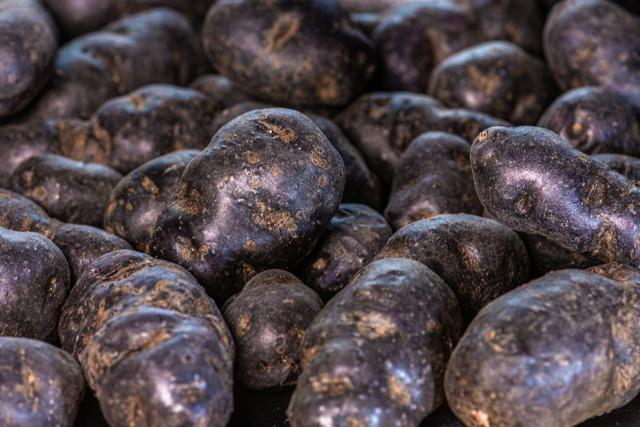 КАРТОФЕЛЬ В КОСМОСЕ: ученые вырастят ГМО-овощ
