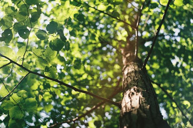 ПРИБОР «КИПАРИС»: определяет здоровье деревьев