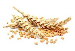 Крупа пшеничная, ячневая, горох колотый с Алтая