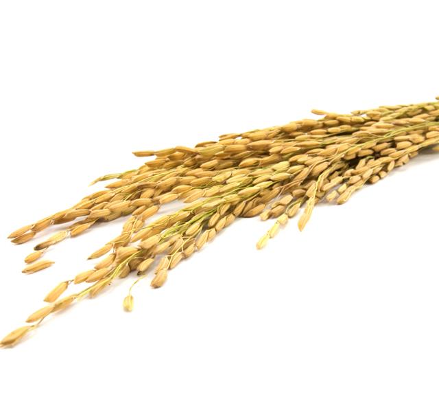 Продаю семена кормовых трав