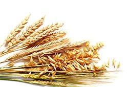 Продаём пшеницу, кукурузу, семечки и др.