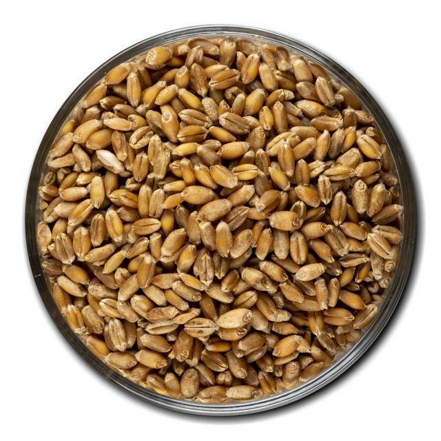 Пшеница 3 класса, год урожая 2019