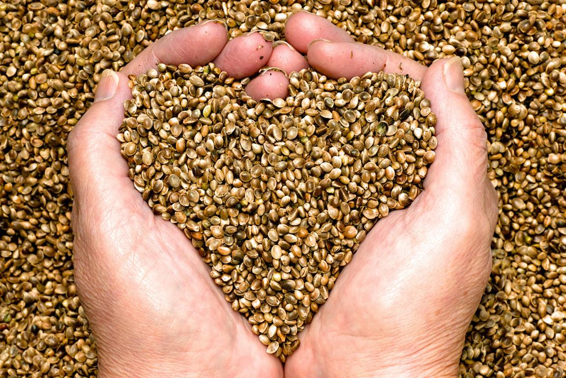 Протеин из семян конопли.
