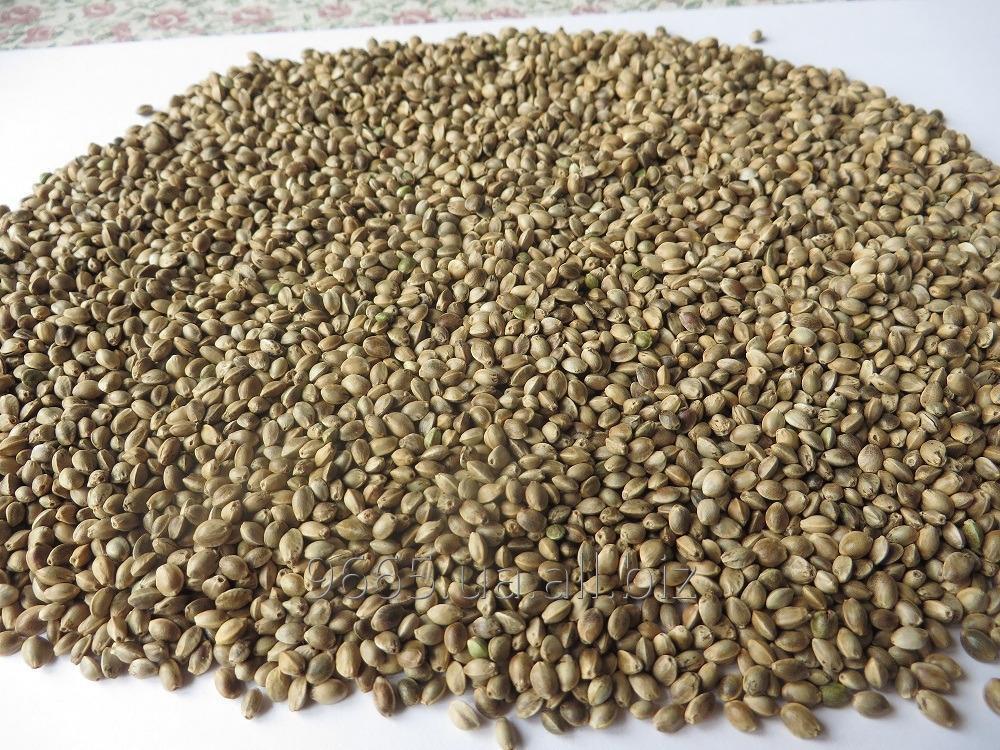 Семена конопли №191879