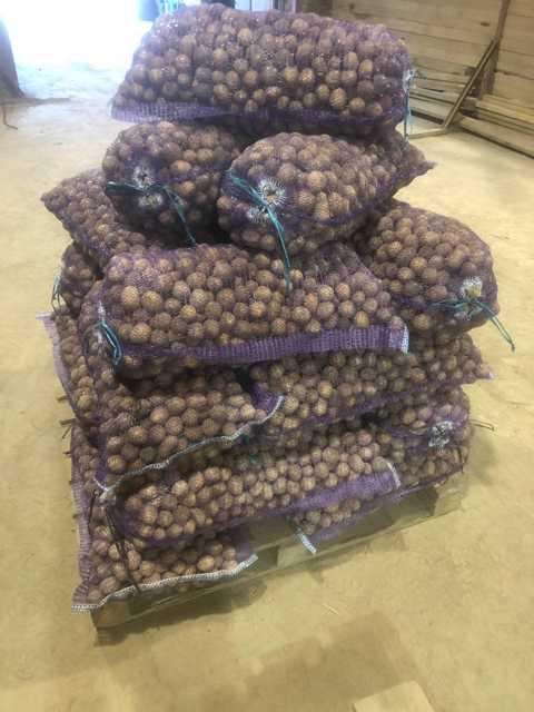 Картофель калибр 30-45