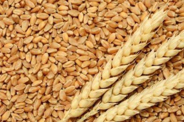 Пшеница фасованная в мешки