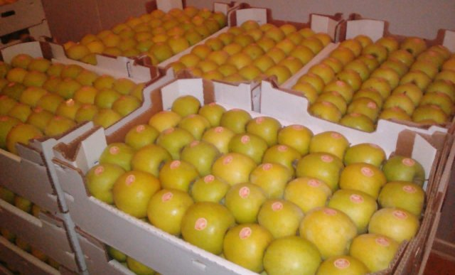 Яблоко Голден импорт из AZ