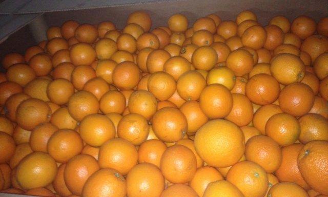 Апельсины Иран №7437