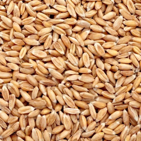 Продаем Пшеницу 5 кл