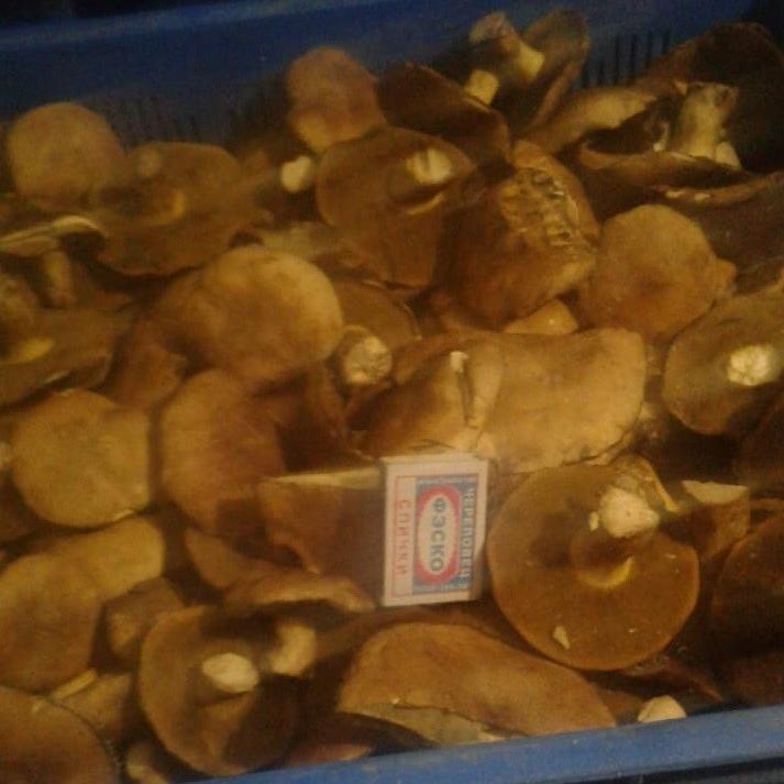Замороженные грибы моховики