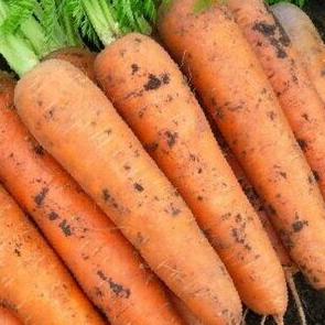 Морковь Каскад №281218