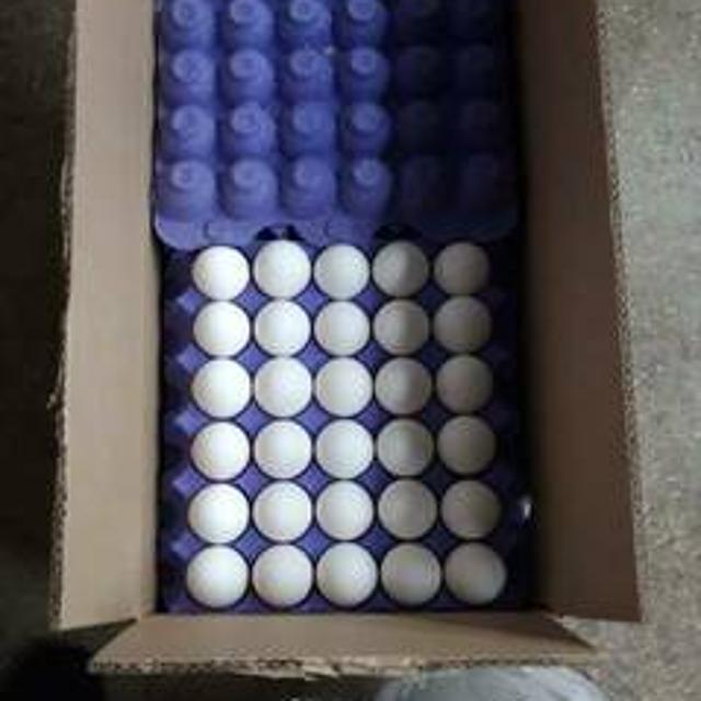 Яйца оптом №99646