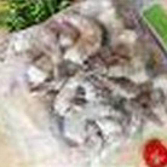 Креветки королевские 16 20 1 кг