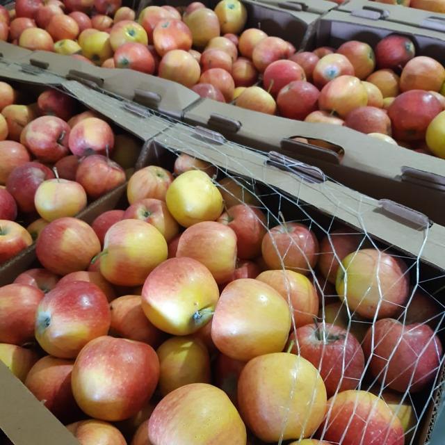 яблоки мелким оптом наличный безналичный расчет