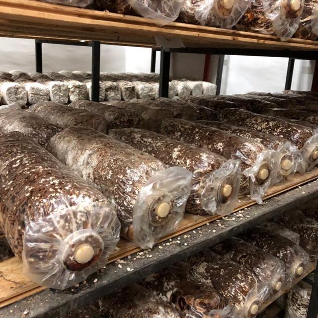 Субстратрные блоки грибов шиитаке