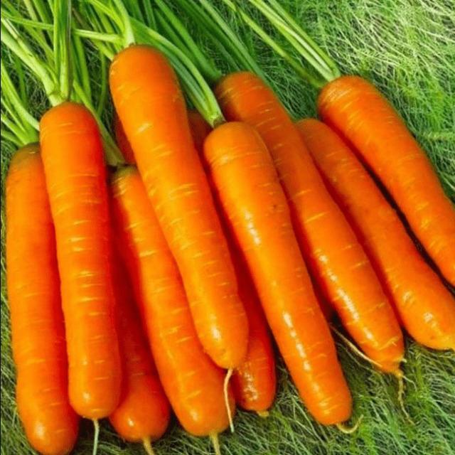 Семена моркови Нантская 4
