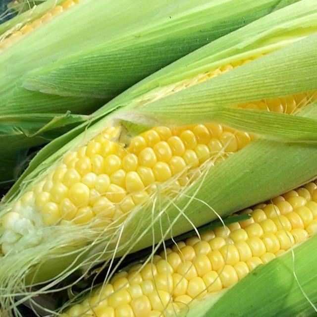 Сахарная сладкая кукуруза в початках BONDUELLE (урожай 2