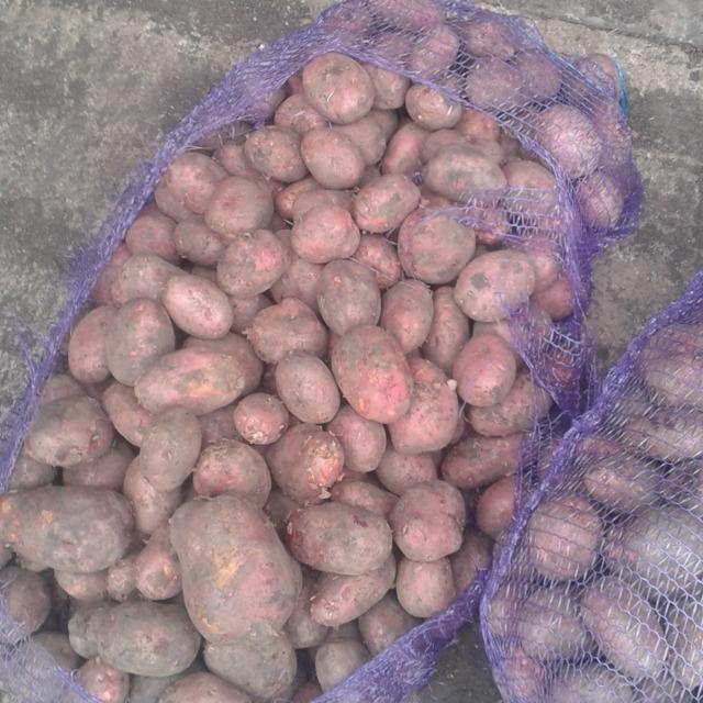 Картофель №186104
