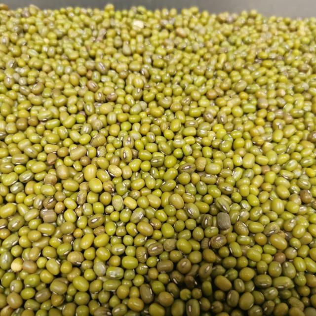 Маш продовольственный (Vigna radiata L.)