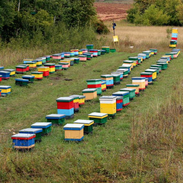 Алтайский мёд и пчелопродукты урожай2020