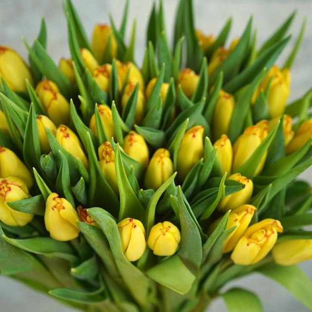 Тюльпаны оптом Красноярск,Новосибирск,Кемерово,Иркутск