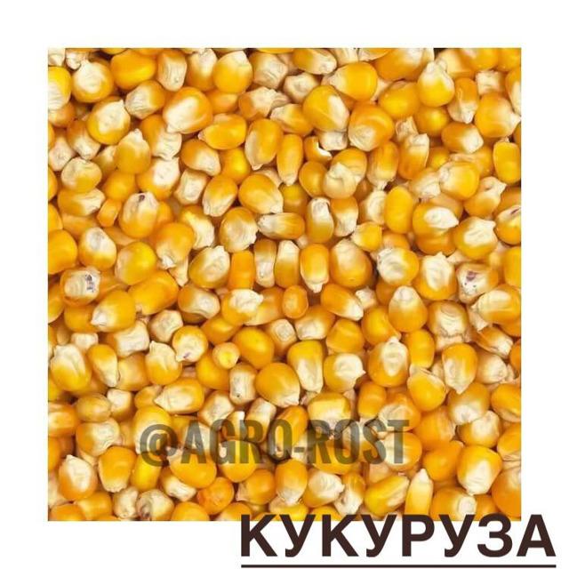 Кукуруза №24540