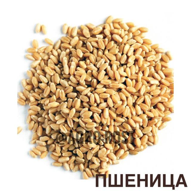 Пшеница 3,5 класс