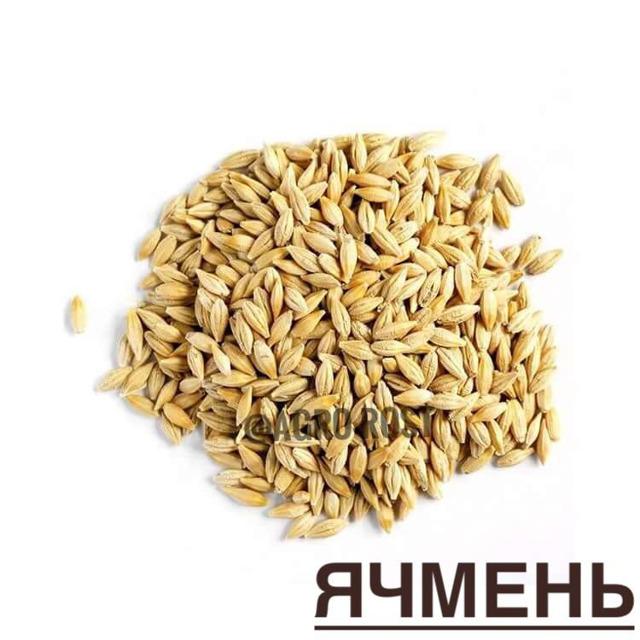 Ячмень семена №24544