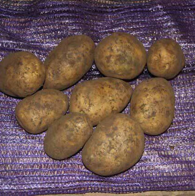 Молодой картофель калибра 30-35 мм урожая 2020 г оптом