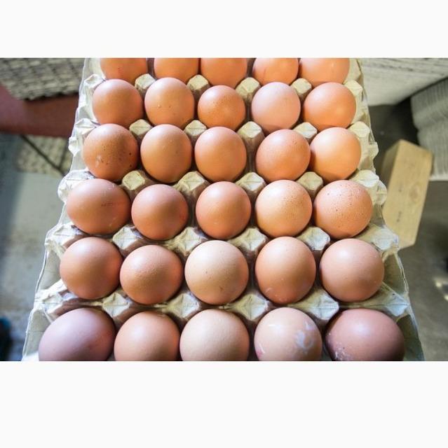 Яйцо, меланж
