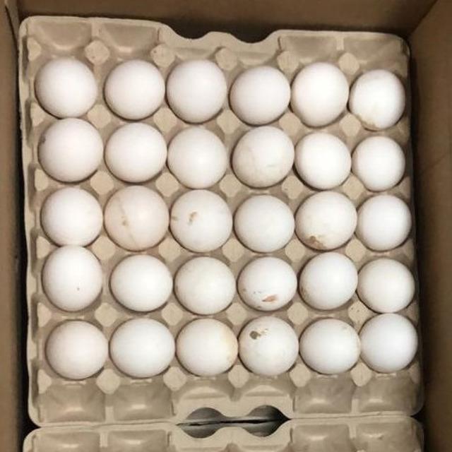 Яйцо куриное №298433