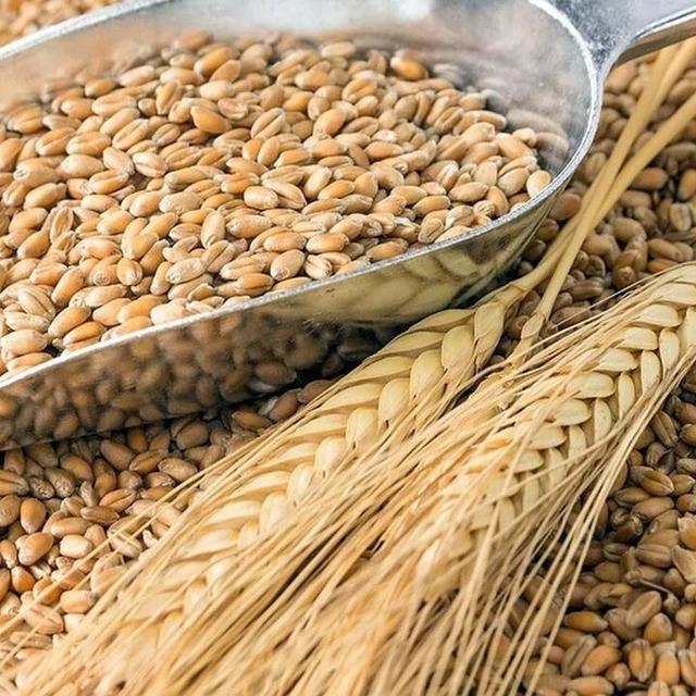 Пшеница №298525