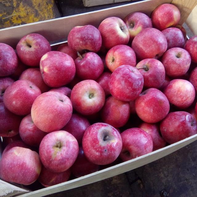 Яблоко оптом №300943