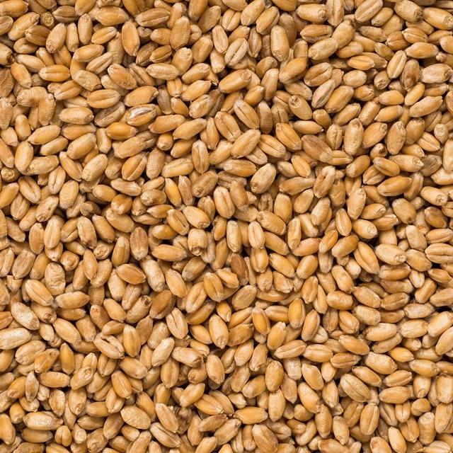 Пшеница отборная Алтайская