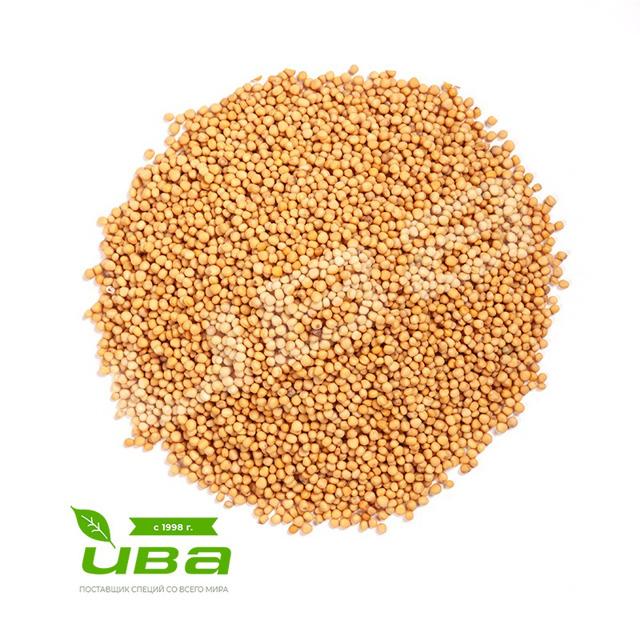 Горчица семена желтые Индия