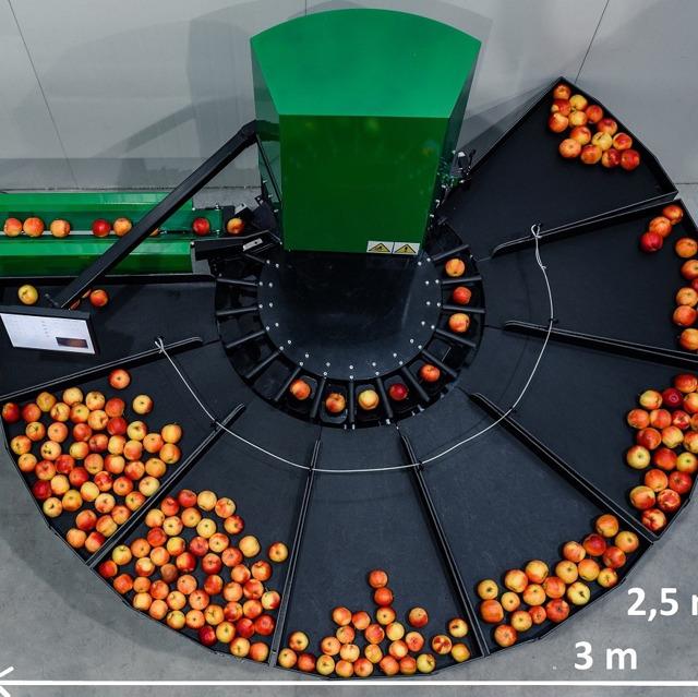 Линия для сортировки яблок 1,2 т/час