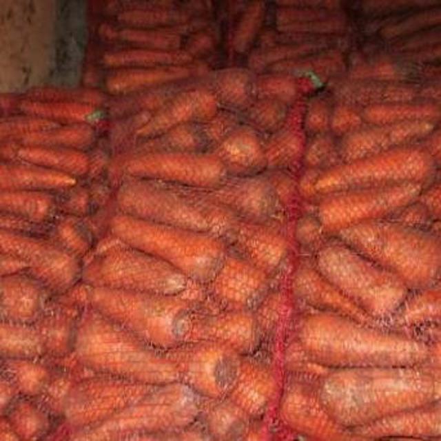 морковь №312470