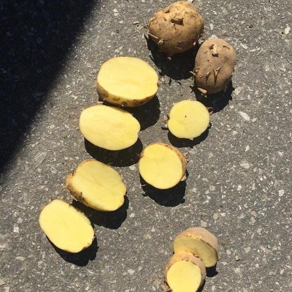 Картофель оптом 5,от производителя
