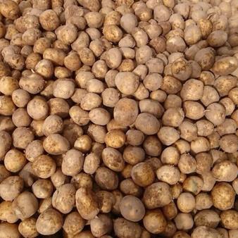 Семенной картофель, сорт ГАЛА (желтая)