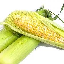 Кукуруза №8916